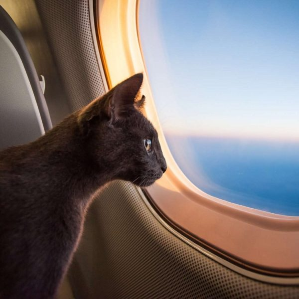Как перевозят животных в самолете по России и за границей